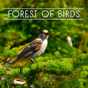 Forest of Birds – Nature Sounds for Relaxation, Meditation Music, Singing Birds, Soft Music, Pure Mind, Music for Rest, Nature Sounds