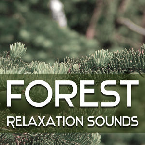 Forest Relaxation Sounds – Music to Calm Down, Bird Songs, Rest Music, Soft New Age Sounds