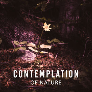 Contemplation of Nature – Sounds for Relaxation, Stress Relief, Deep Sleep, Nature Sounds, Relaxing Therapy, Sounds of Nature, Harmony, Calmnes