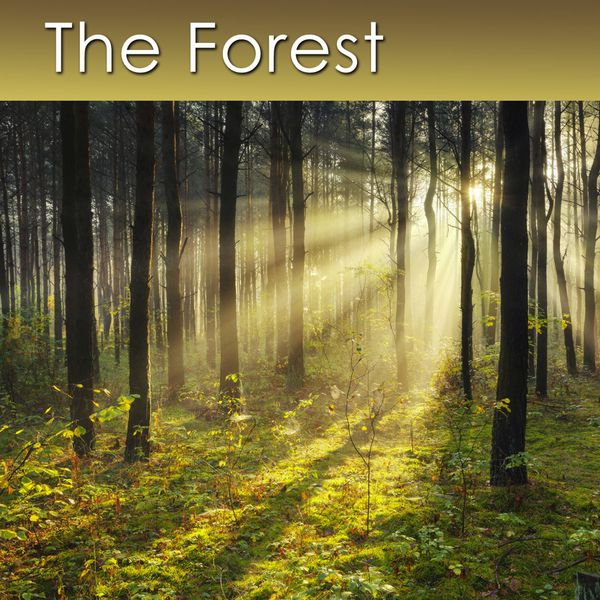 Henshaw the forest relaxing music with healing sounds of the forest