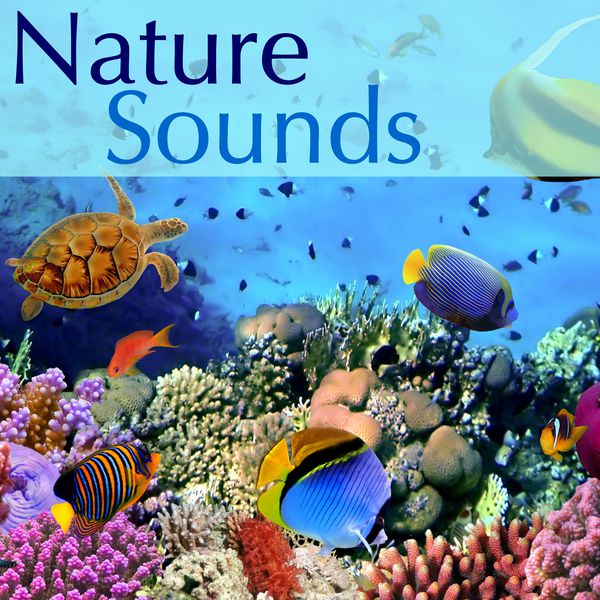 Music sleep water sound natural sounds and relaxing sounds of nature