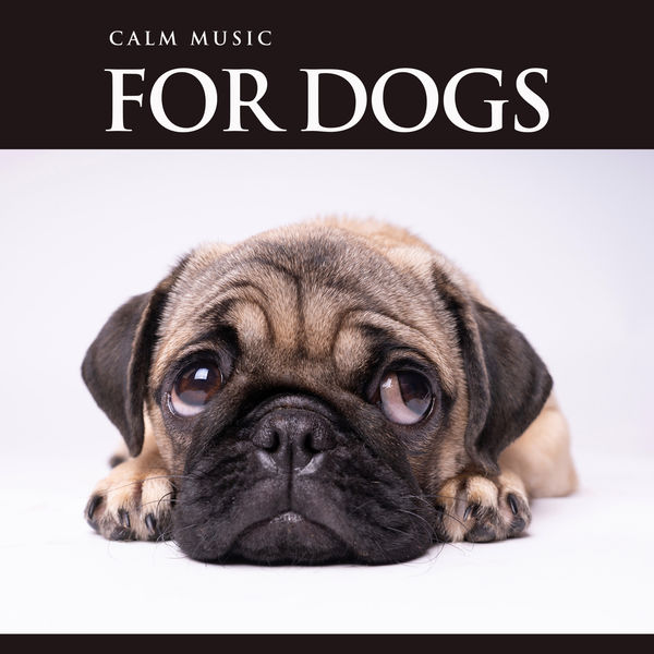 Dog Music - Calm Music For Dogs: Relaxing Background Music For Dog's While You're Away, Music For Pets and The Bets Dog Music