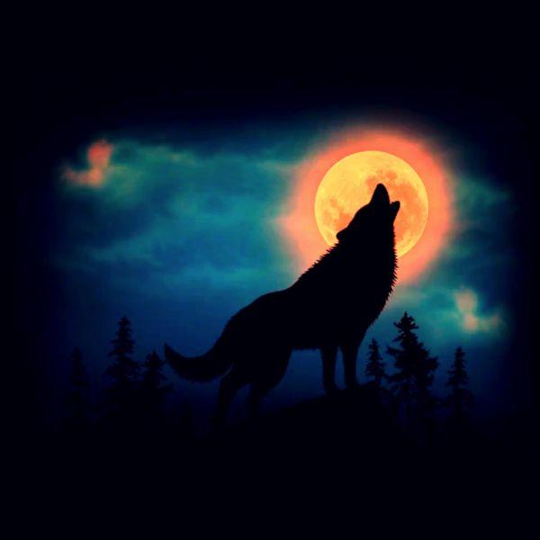 Jay Brad - V Lone Wolf