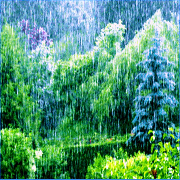 Nature Sounds - The Living Forest Rain