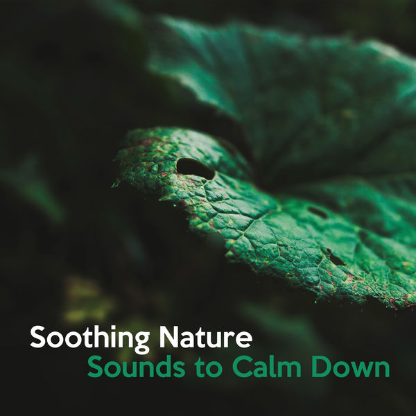 Soothing Nature Sounds to Calm Down – Peaceful Nature Waves