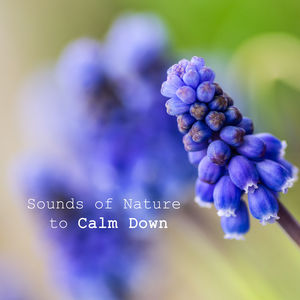 Sounds of Nature to Calm Down – Peaceful Music, Healing Songs, Anti Stress Music, Pure Relaxation, Soothing Piano, Sounds of Birds, Relaxing Waves