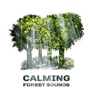Calming Forest Sounds – Music to Relax, Sounds of Nature, Rest with New Age Songs
