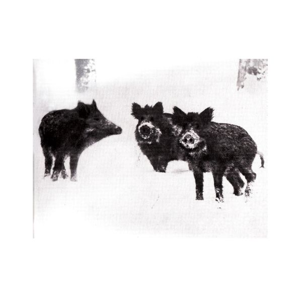 Burial - Naked Pigs / Warfare Orgasm Single