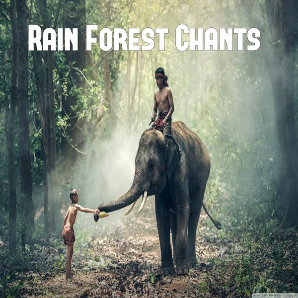 Rain Forest Chants | Relaxing Music Sounds – Download and listen to