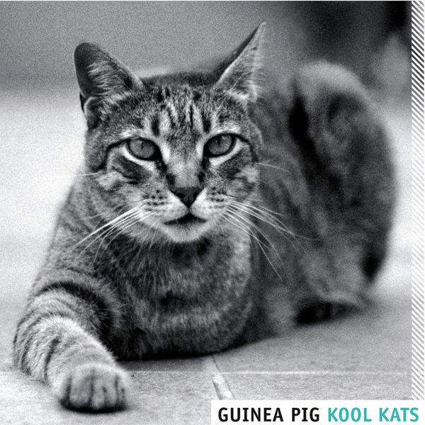 Guinea Pig - Kool Kats