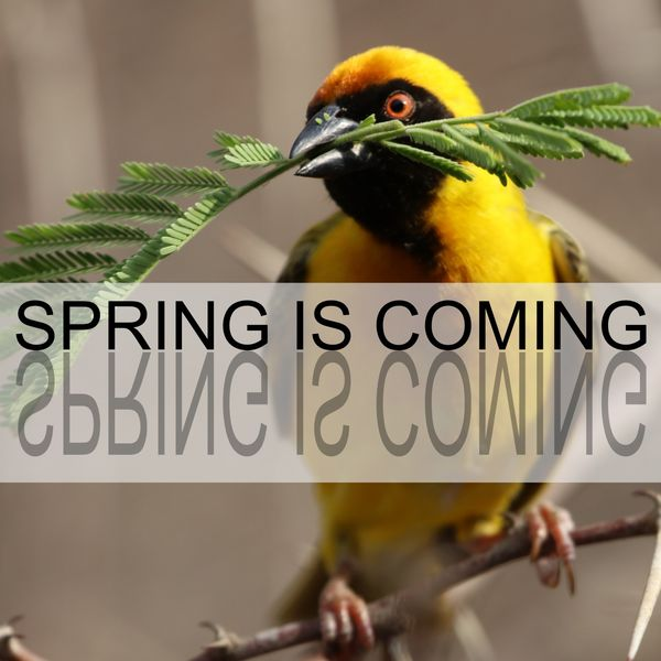 Bird Sounds - Spring Is Coming