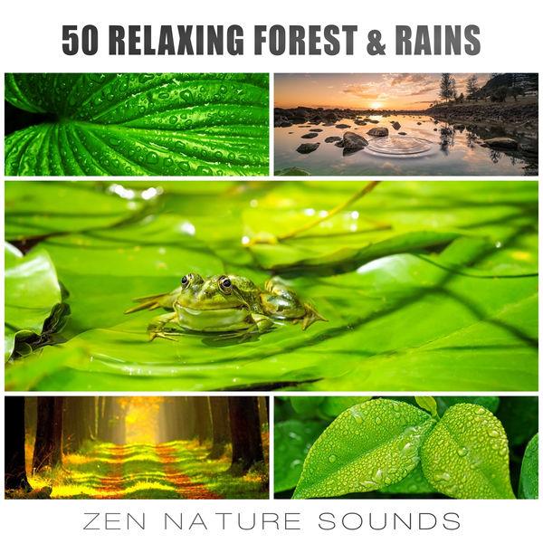 50 Relaxing Forest & Rains: Zen Nature Sounds, Gentle Winds