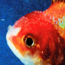Big Fish Theory | Vince Staples