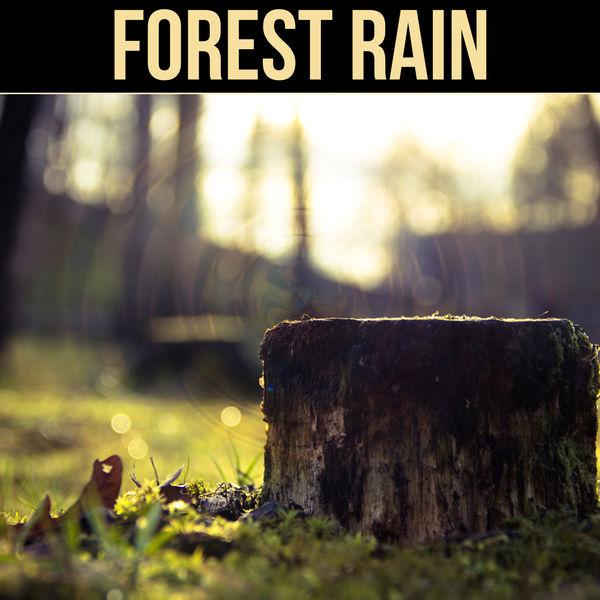 Forest Rain - Soft Falling Rain, Relaxing Melody, Restful