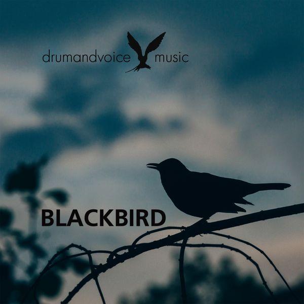 Drumandvoice - Blackbird