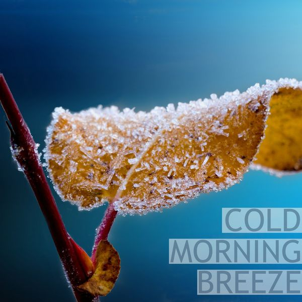 Nature Sounds - Cold Morning Breeze