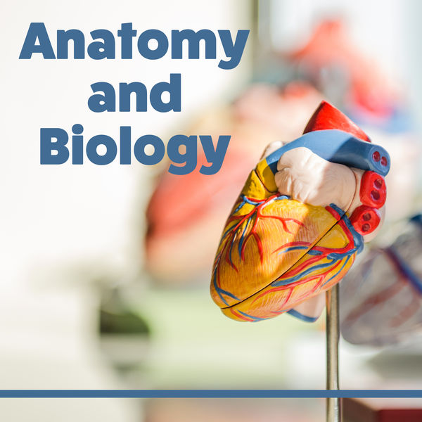 Anatomy And Biology Learning Together Best Time To Learn