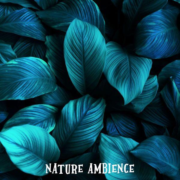 Rain Sounds - Nature Ambience
