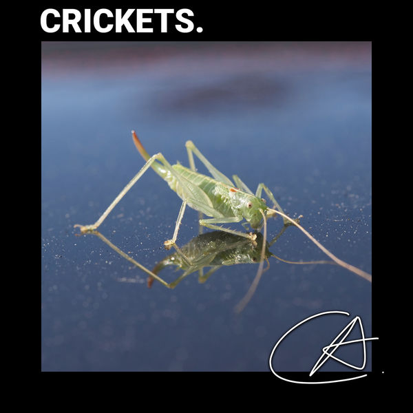 Rain Sounds - Cricket Sounds