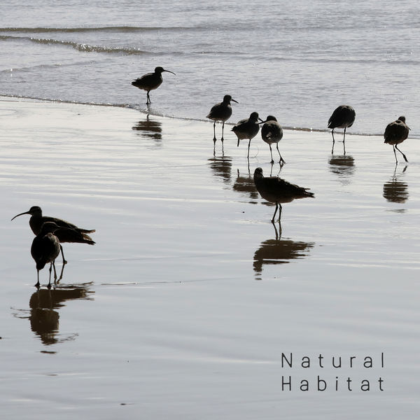Healing Power Natural Sounds Oasis - Natural Habitat - Collection of Nature Sounds: Water and Birds