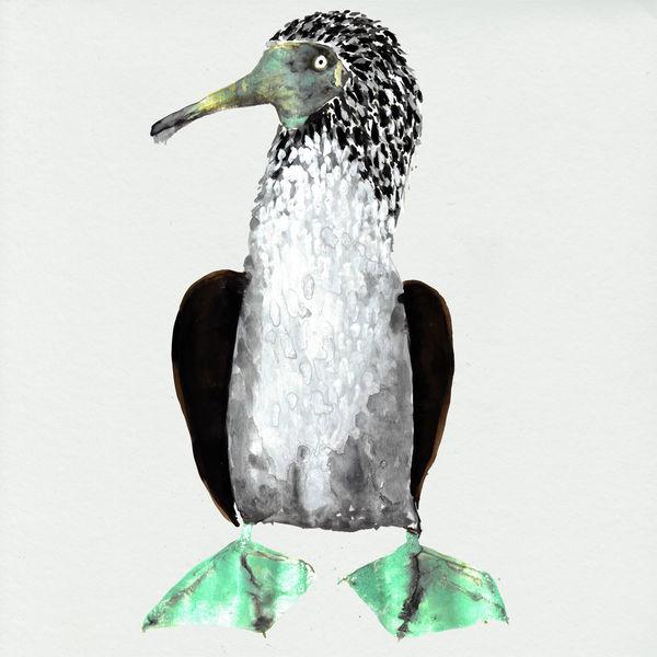 Cosmo Sheldrake - Galápagos