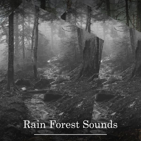 Album Rain Forest Sounds – Soothing Ambience for Relaxation