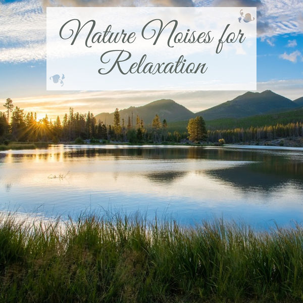 Album Nature Noises for Relaxation – Sounds of Nature to