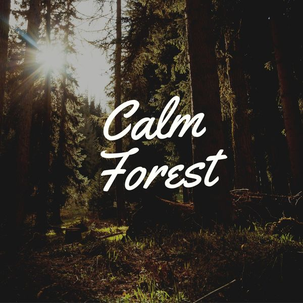 Jox Talay - Calm Forest
