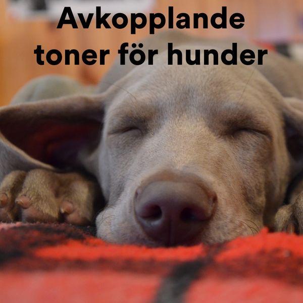 Various Artists - Avkopplande Toner För Hunder