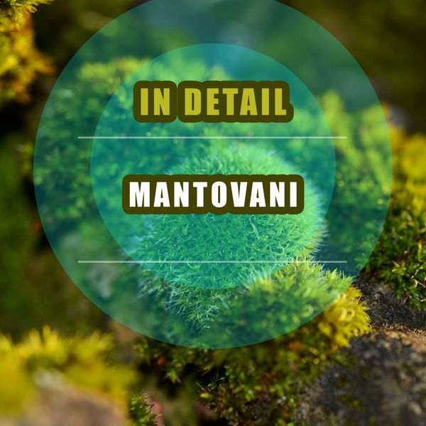 Mantovani & His Orchestra - In Detail