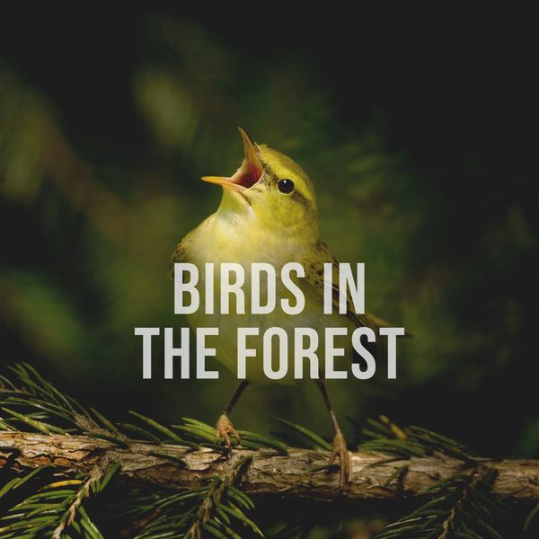 Alpine Sounds - Birds in the Forest: Enjoy the Natural Sounds of Happy Birds in the Forest