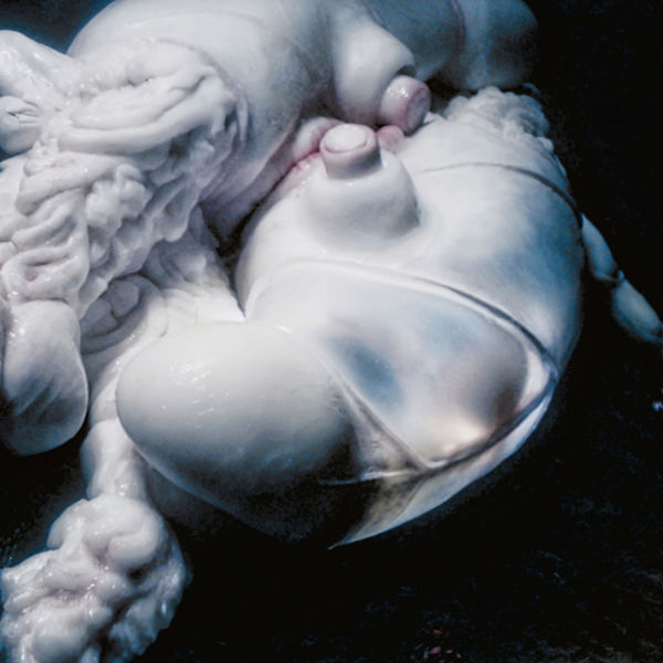 Björk|Arisen My Senses