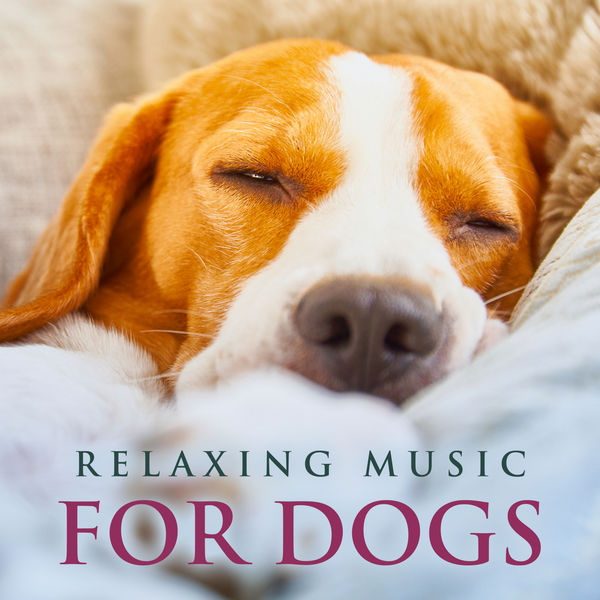 Dog Music - Relaxing Music For Dogs: Soothing Piano Dog Music, Music For Dogs While You're Away, Music For Pets and The Best Background Music For Dogs