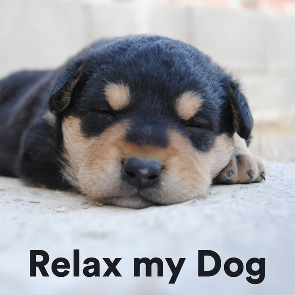 Various Artists - Relax My Dog