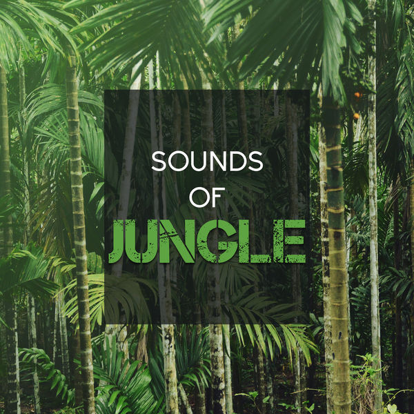 Nature Sounds - Sounds of Jungle