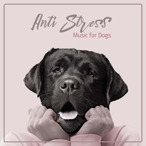 Therapeutic Music Zone - Anti Stress Music for Dogs