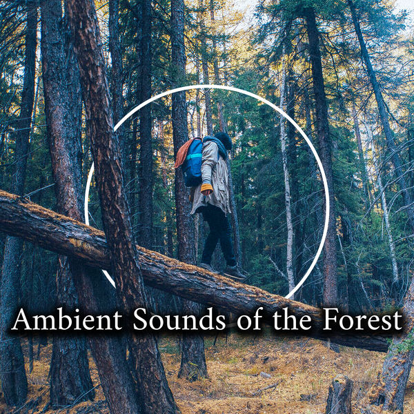 Positive Energy Academy - Ambient Sounds of the Forest - Collection of Wonderfully Relaxing Sounds of Birds, Water and Wind, The Greatest Nature Sounds, Healing Therapy, Harmony of Senses, Feel So Good, Relaxation Breeze