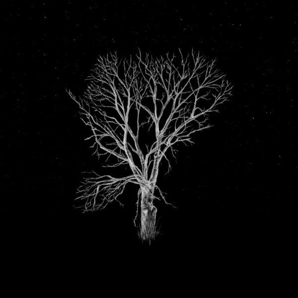 Fink - Bloom Innocent - Acoustic