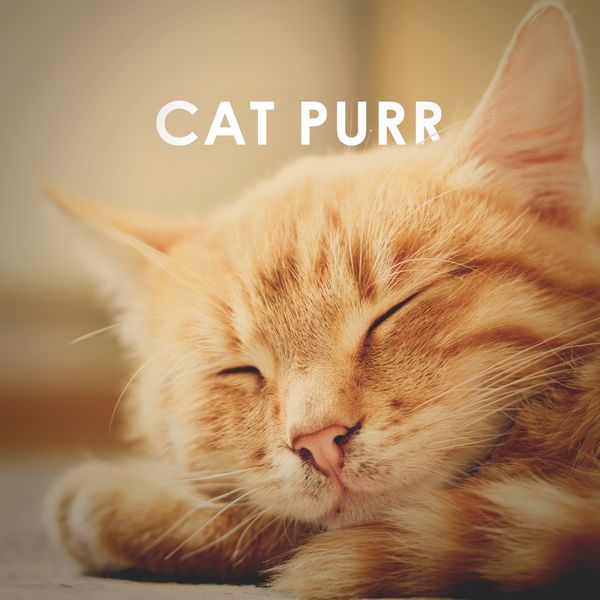 Album Cat Purr: 1 Hour Asmr Sound for Sleep, Study and