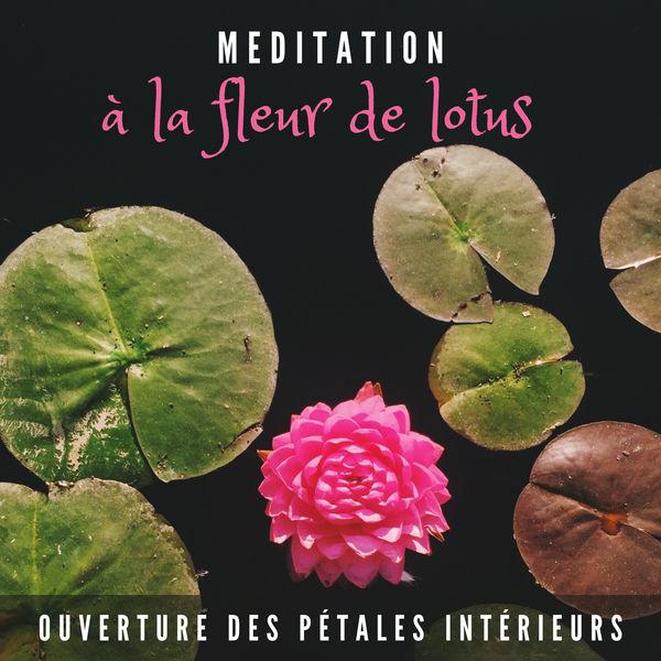 Ensemble de Musique Zen Relaxante - Méditation à la fleur de lotus