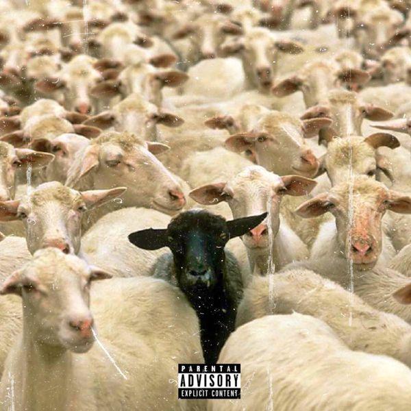 Monte Carlo - BLVCK SHEEP
