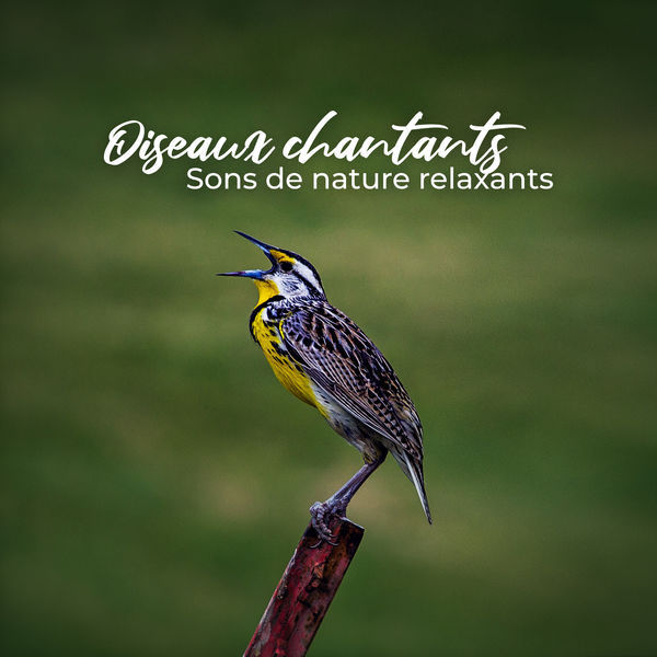 Ensemble de Musique Zen Relaxante - Oiseaux chantants: Sons de nature relaxants – Forêt, Les montagnes, Vagues de l'océan, Musique de relaxation profonde